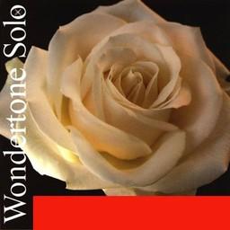 Pirastro 410521 Wondertone Solo